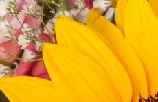 Enchanted Florist Designers Choice