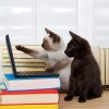two kittens register for online banking